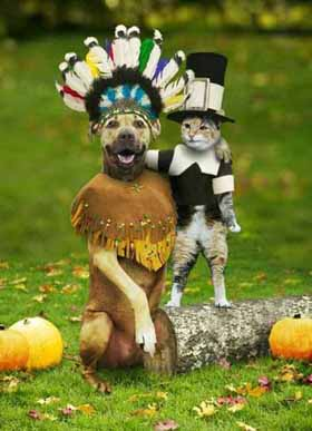 thanksgiving-dog-cat1