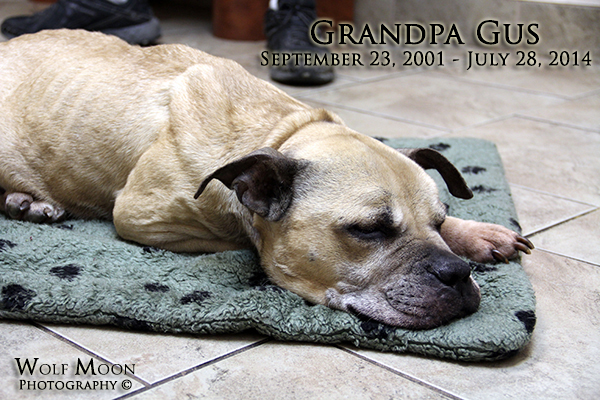 gus-goodbye-july2014-4606-1